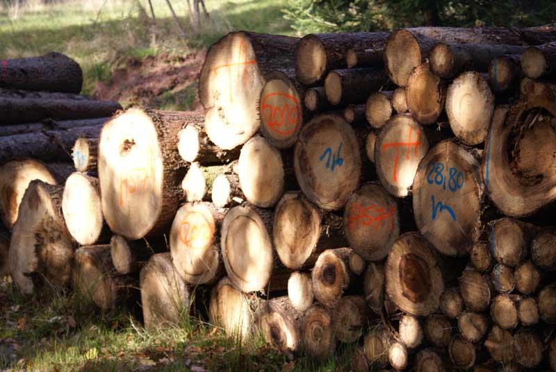 Kleine Holzkunde